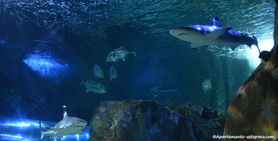 Sealife Benalmadena